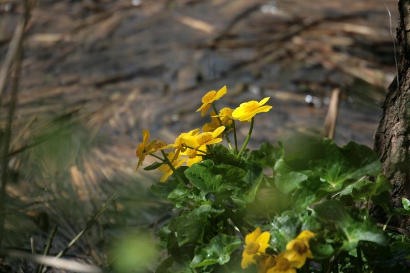 gele bloemetjes website