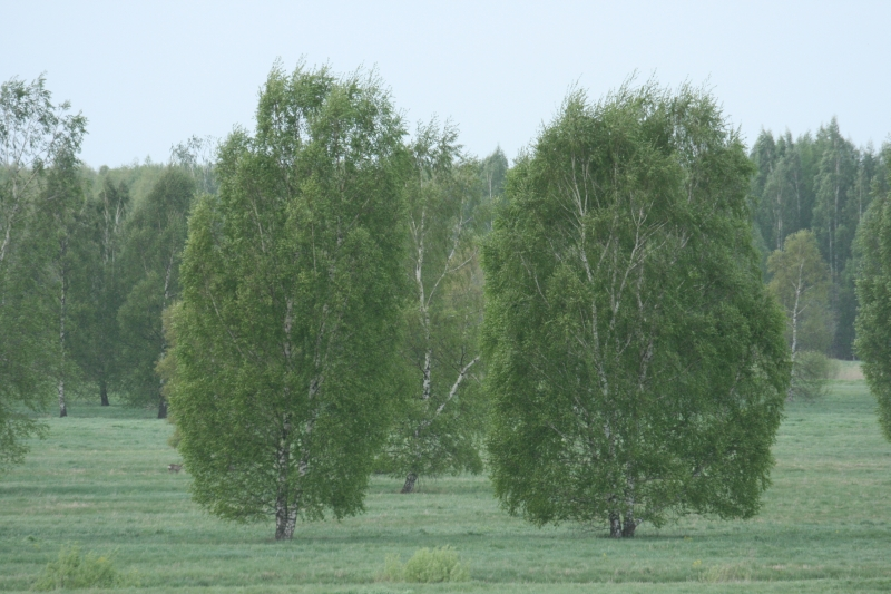 14-5 mooie bomen
