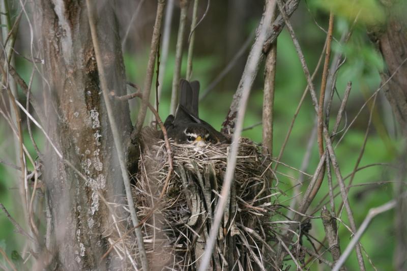 14-5 vogel op nest