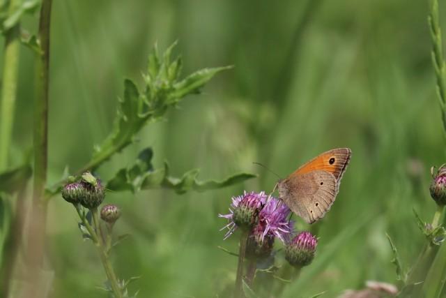 website vlinder 2