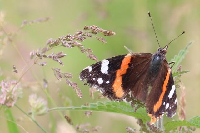 website vlinder
