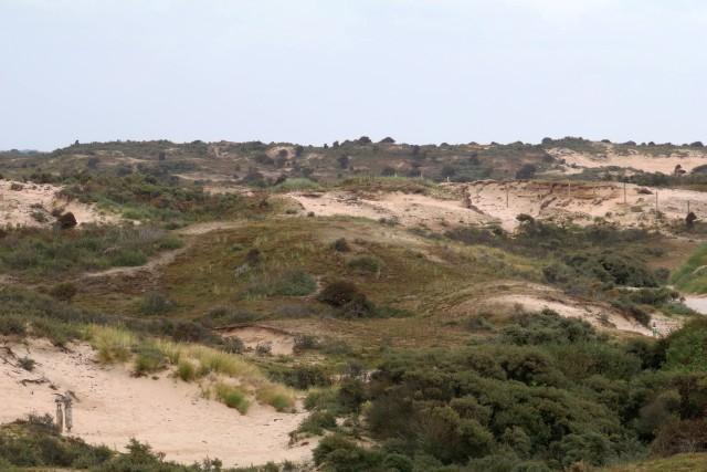 website landschap